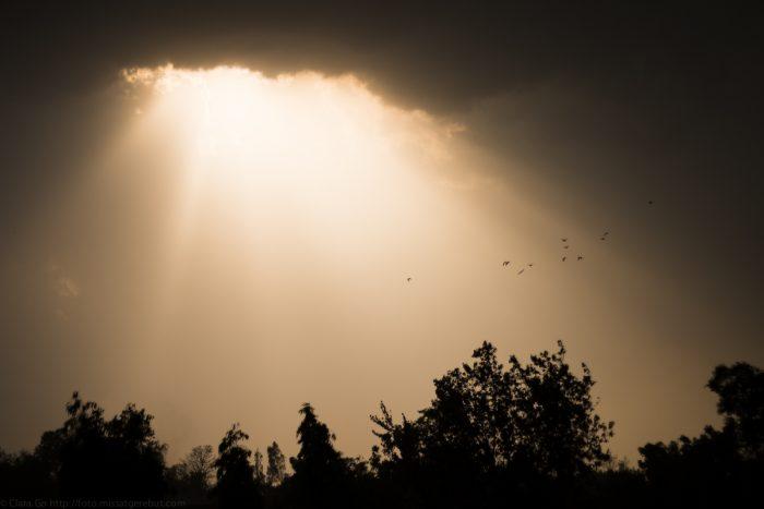 © Clara.Go-Project 52 – 16/52 – Pluja – Lluvia – Rain – #52w16