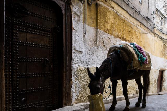 Morroco-Clara.GO-Marroc-nov-2013-_MG_3934