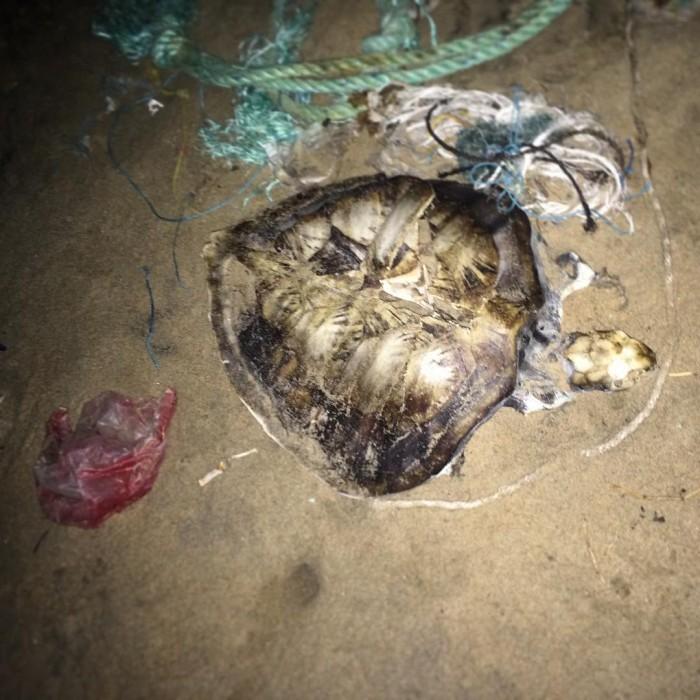Mahabalipuram dead turtle