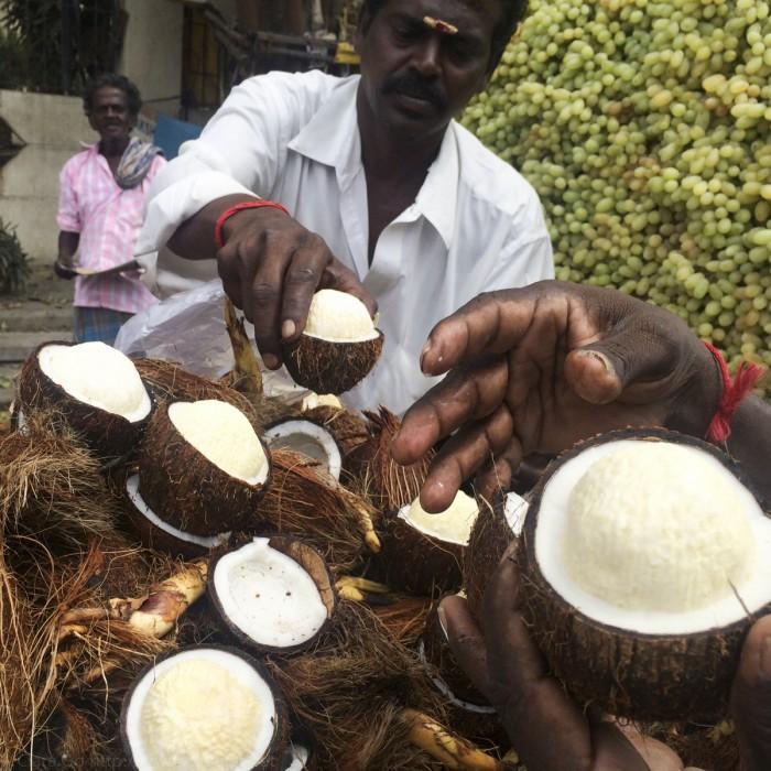 Velachcheri, Tamil Nadu, India - coconut