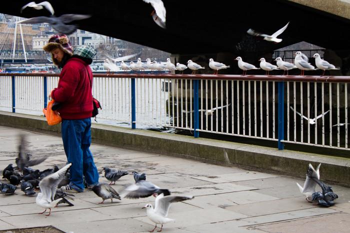The birds Charmer_ © Clara.Go